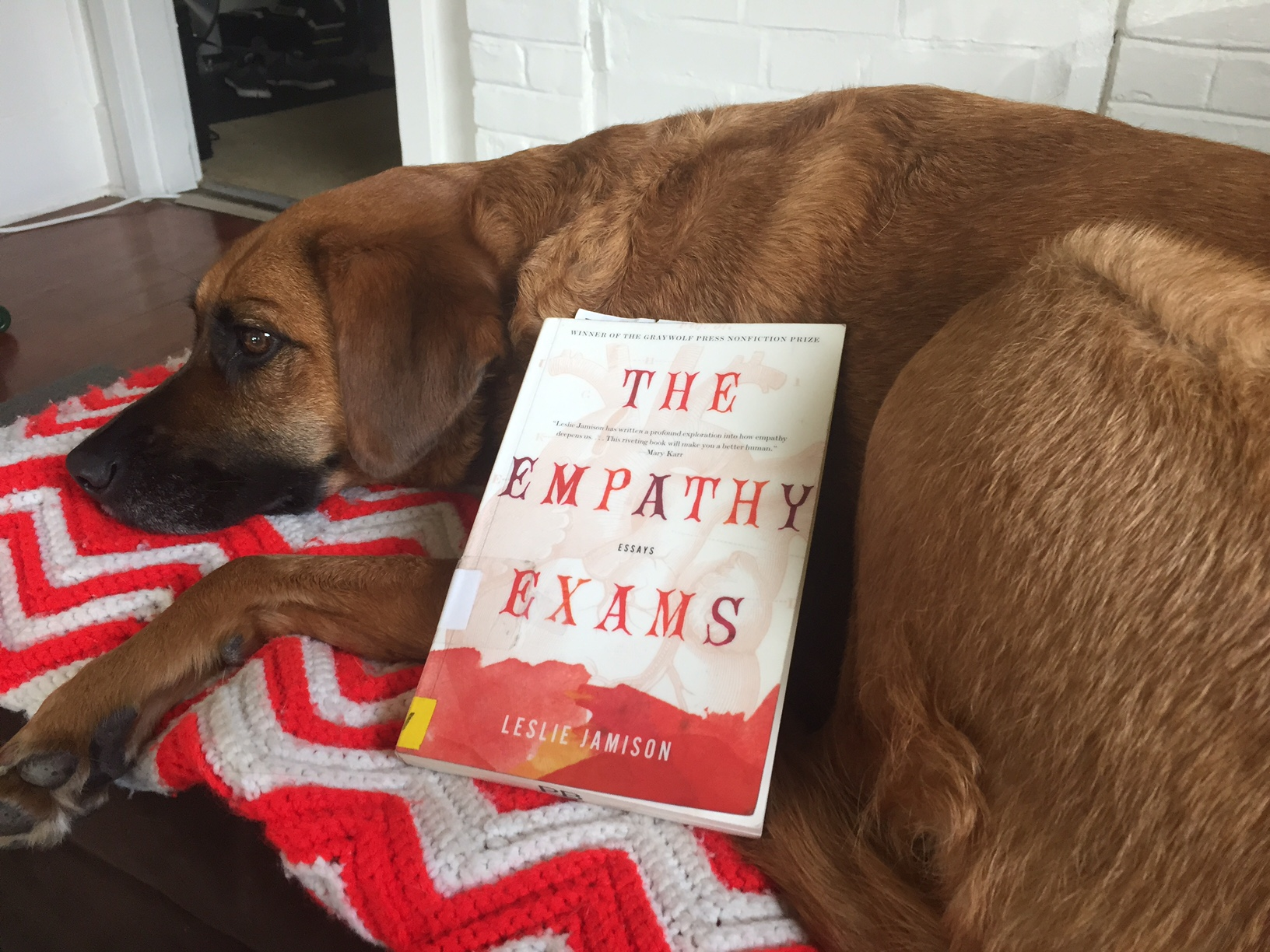 essay on my pet dog in hindi